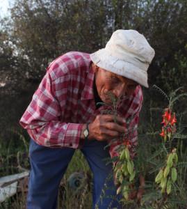 capeandcape-aromatisé-fleur